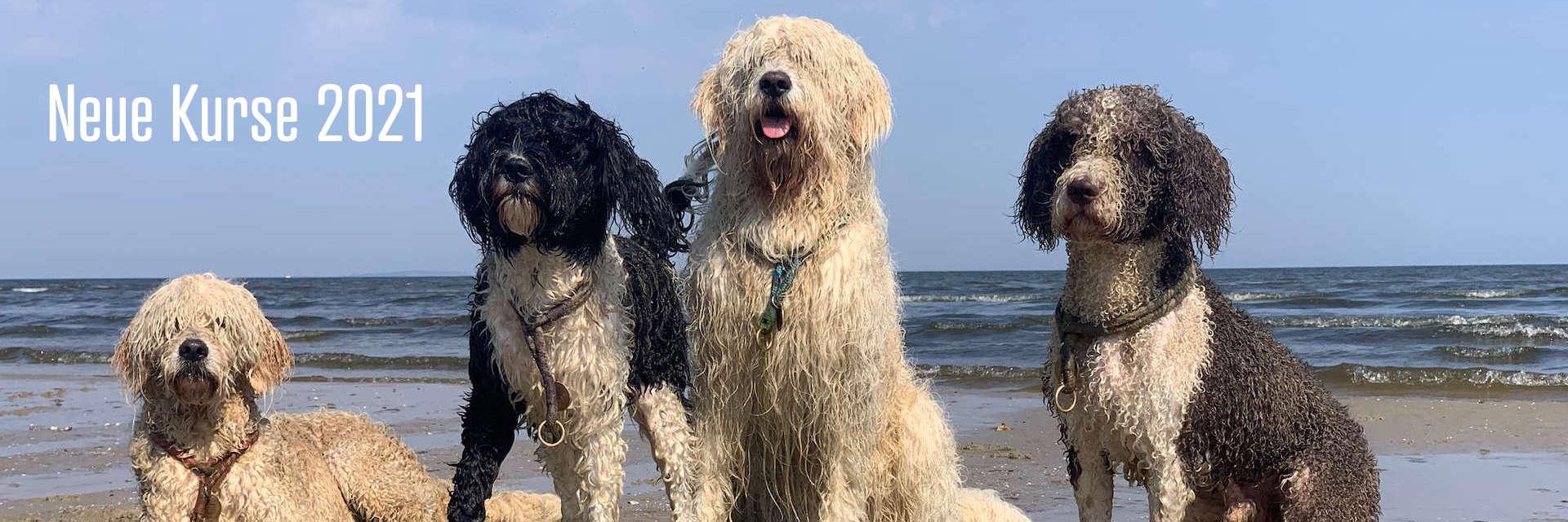 Ausbildung und Kurse für Hund und Mensch 2021