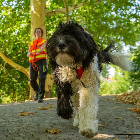 Wenn Hunde zu Lebensrettern werden – MDR Bericht
