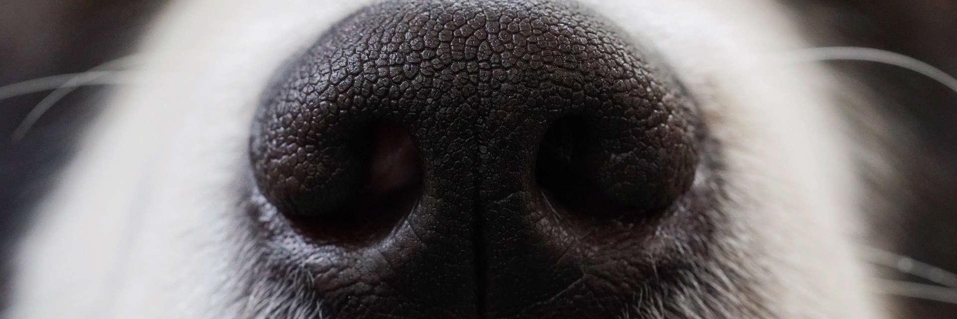 Platzhalter Spürhund